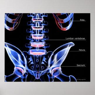 Los huesos del más de espalda poster