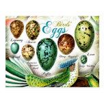 Los huevos de los pájaros coloridos postal