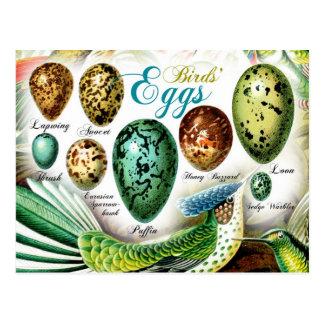 Los huevos de los pájaros coloridos tarjeta postal