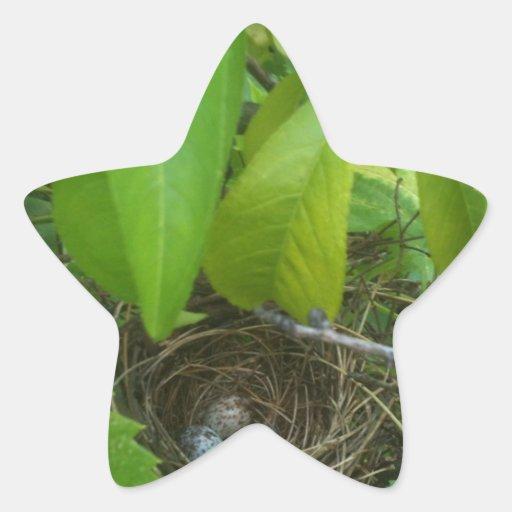 ¿Los huevos del pájaro de la conjetura que? Calcomanías Forma De Estrellas