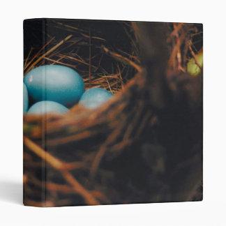 Los huevos del petirrojo azul