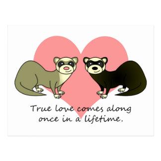 Los hurónes lindos verdad amor tarjeta postal
