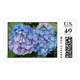 Los Hydrangeas azules teñieron con púrpura Sellos