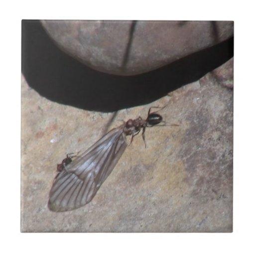 Los insectos/los arácnidos negros del barranco de  tejas