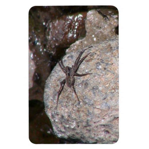 Los insectos/los arácnidos negros del barranco de  imán flexible