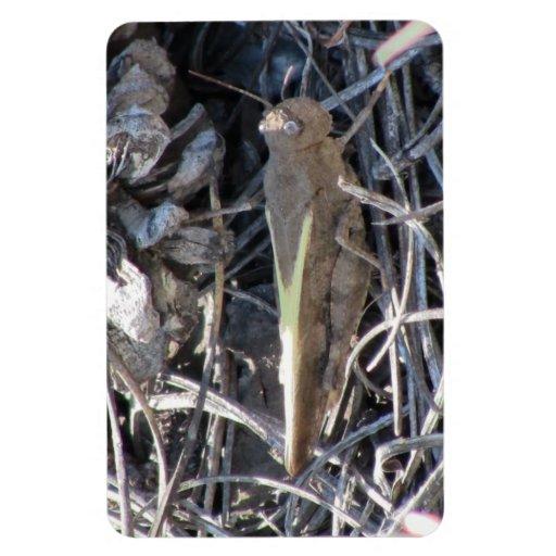 Los insectos/los arácnidos negros del barranco de  imanes flexibles