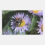 Los insectos/los arácnidos negros del barranco de rectangular pegatina
