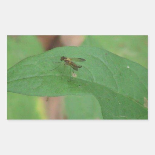 Los insectos/los arácnidos negros del barranco de pegatina rectangular