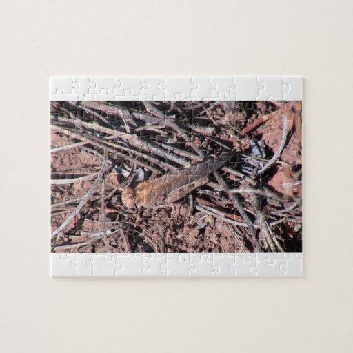 Los insectos/los arácnidos negros del barranco de  rompecabezas