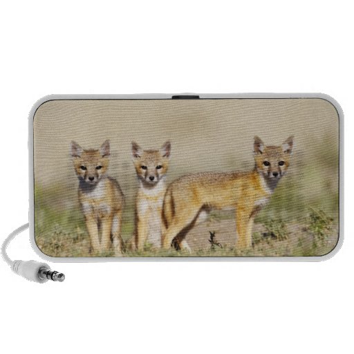 Los jóvenes rápidos del Fox (macrotis del Vulpes)  Altavoces De Viaje