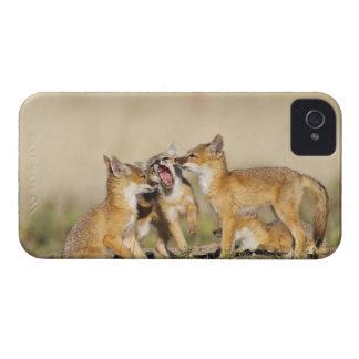 Los jóvenes rápidos del Fox (macrotis del Vulpes) Case-Mate iPhone 4 Cobertura