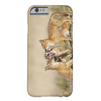 Los jóvenes rápidos del Fox (macrotis del Vulpes) Funda De iPhone 6 Barely There