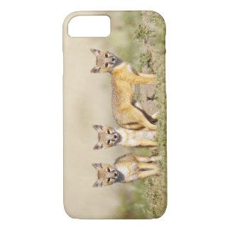 Los jóvenes rápidos del Fox (macrotis del Vulpes) Funda iPhone 7