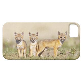 Los jóvenes rápidos del Fox (macrotis del Vulpes) Funda Para iPhone SE/5/5s
