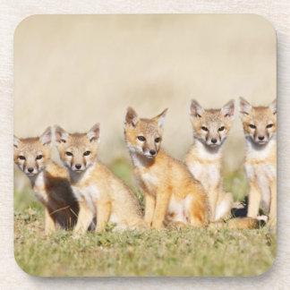 Los jóvenes rápidos del Fox (macrotis del Vulpes)  Posavasos