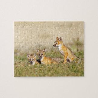 Los jóvenes rápidos del Fox (macrotis del Vulpes)  Rompecabezas