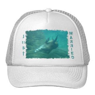 Los leones marinos acaban de casar el gorra