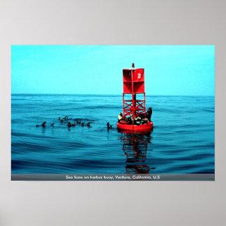 Los leones marinos en puerto buoy, Ventura, Califo Impresiones