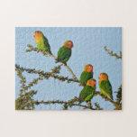 Los Lovebirds de Fischer (fischeri del Agapornis) Puzzle Con Fotos