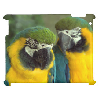 Los Macaws del azul y del oro encajonan el iPad li