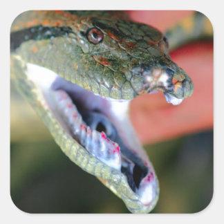 Los mandíbulas de la serpiente del Anaconda abren Pegatina Cuadrada