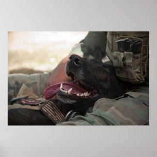 Los militares sonrientes del pastor alemán persigu póster