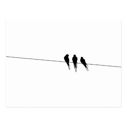 Los mirlos siluetean en el alambre tarjeta postal