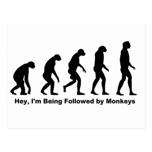 Los monos ey me estoy siguiendo tarjeta postal