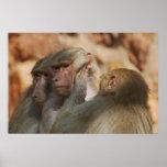 Los monos limpian los oídos impresiones