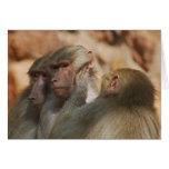 Los monos limpian los oídos tarjeta