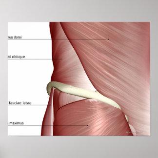 Los músculos de la parte inferior del cuerpo posters