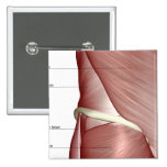 Los músculos de la parte inferior del cuerpo pin cuadrado
