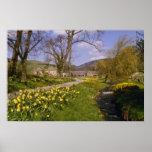 los narcisos amarillos de la primavera, fronteras, impresiones