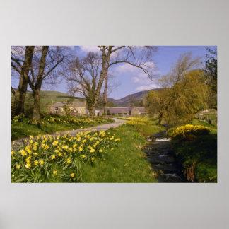 los narcisos amarillos de la primavera, fronteras, póster