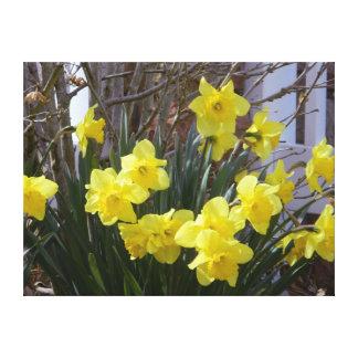 Los narcisos soleados de la primavera envolvieron  impresiones en lona