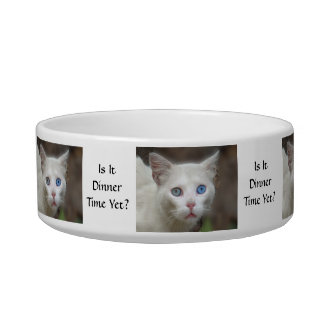 ¿Los ojos azules - es tiempo de cena todavía? Tazones Para Comida Para Gato