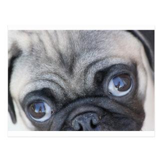 Los ojos de Doobie Postal