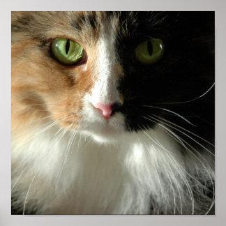Los ojos de gato póster