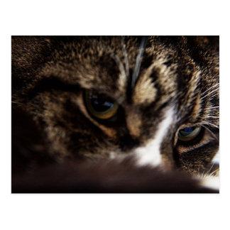 Los ojos de gatos se cierran para arriba tarjetas postales