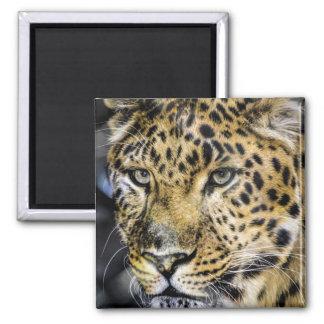 Los ojos de un leopardo imán para frigorífico