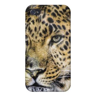 Los ojos de un leopardo iPhone 4 carcasa
