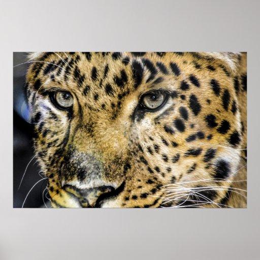 Los ojos de un leopardo póster