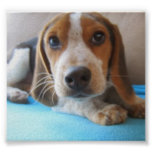 Los ojos de un perrito 2.