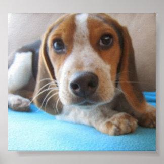 Los ojos de un perrito 2. póster