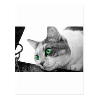 Los ojos del depredador tarjeta postal