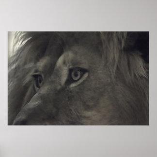 Los ojos del león 2 posters