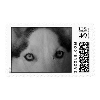 Los ojos del limpiabotas timbres postales