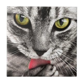 los ojos felinos y la lengua del gato hermoso se l azulejo cuadrado pequeño