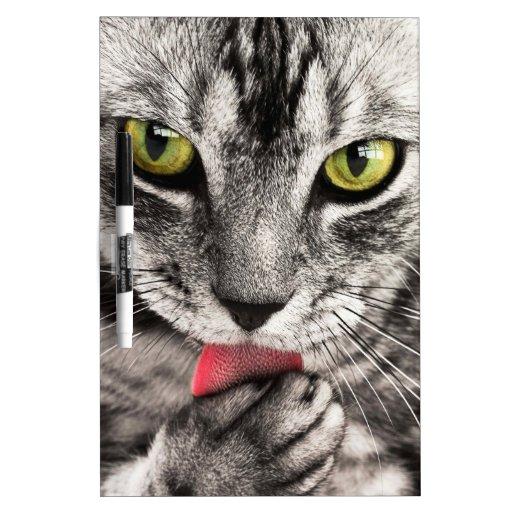 los ojos felinos y la lengua del gato hermoso se l pizarras blancas de calidad