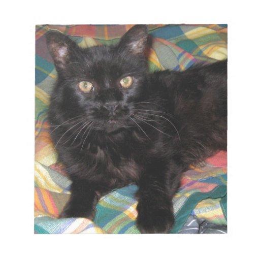 Los ojos viejos de Mercury - fotografía del gato Blocs